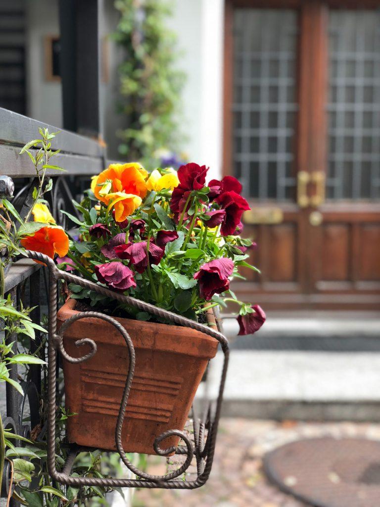Composition florale en bordure de fenêtre