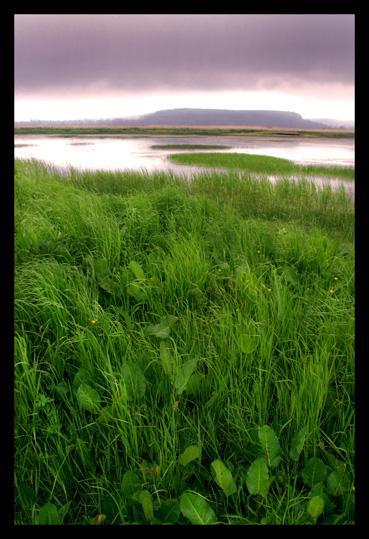 La nature préservée de la réserve naturelle de l'estuaire