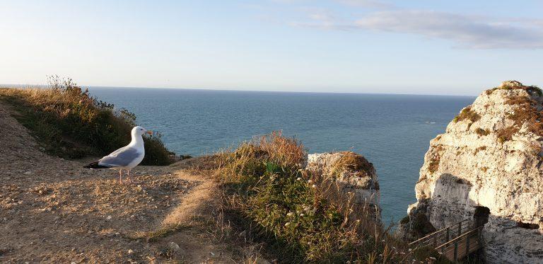 Balade naturaliste sur les falaises en Côte d'Albâtre