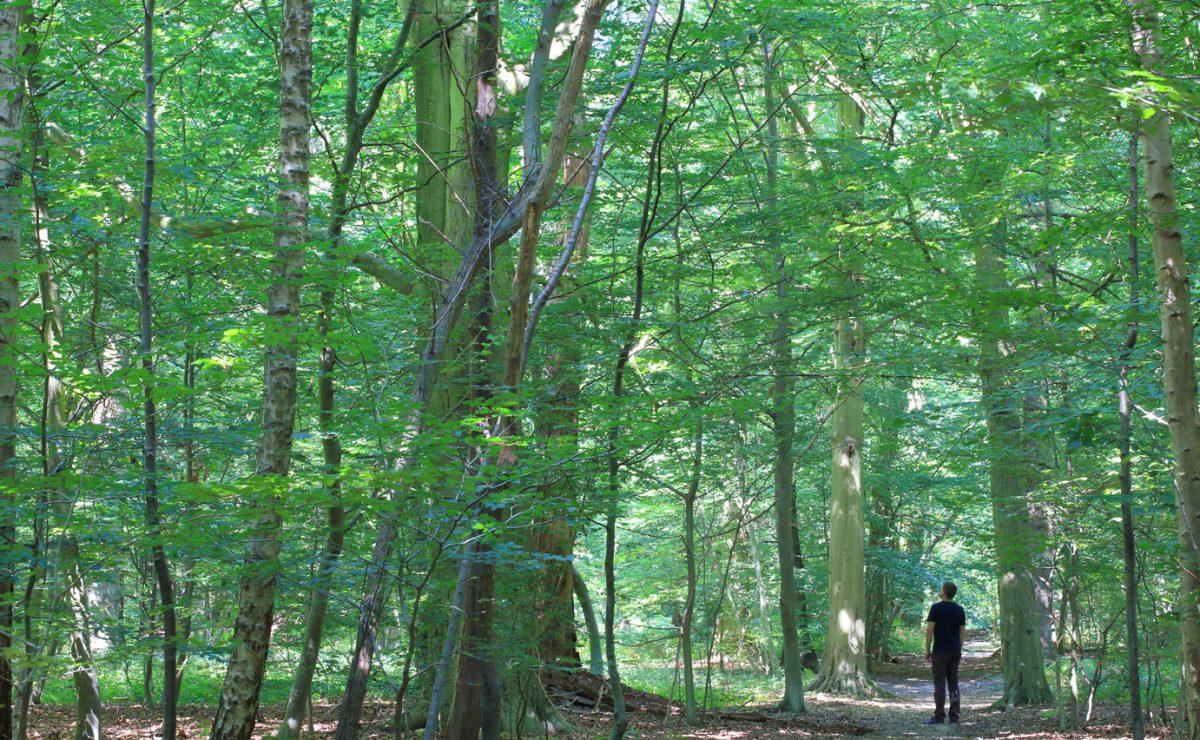 La forêt de Montgeon au Havre