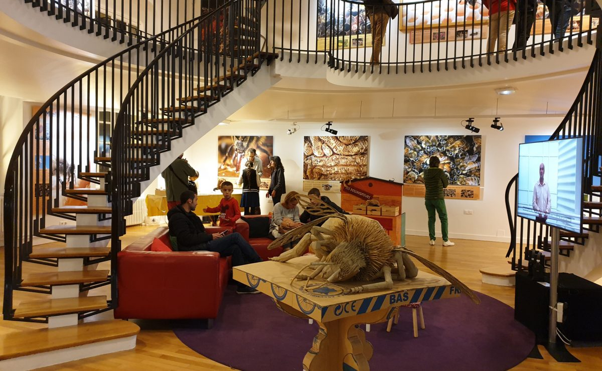 Le Muséum d'Histoire Naturelle au Havre