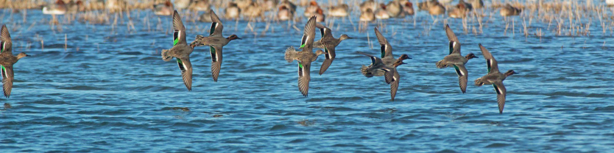 Les oiseaux de la réserve naturelle de l'estuaire